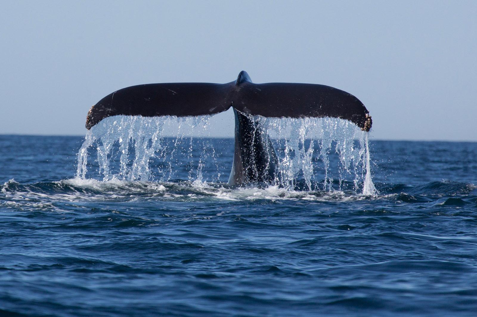 Walvissen in Nieuw-Zeeland