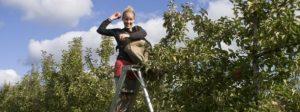 werken en backpacken in australie