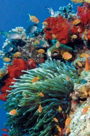 duiken op Akaba