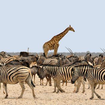 Namibië, een land van verschillen en extremen